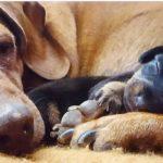 Câncer de mama atinge pets e diagnóstico precoce é aliado na cura da doença